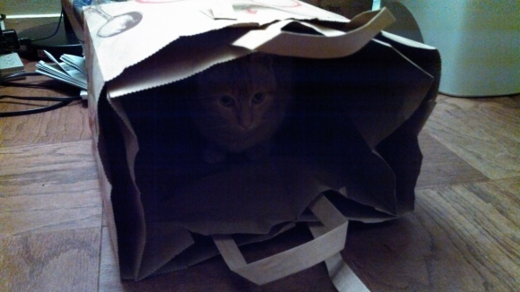 Floyd helps with the recycling.