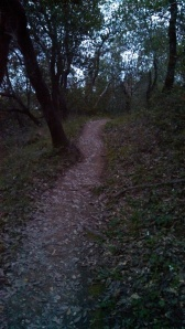 The trail above my house that connects to the other trail.