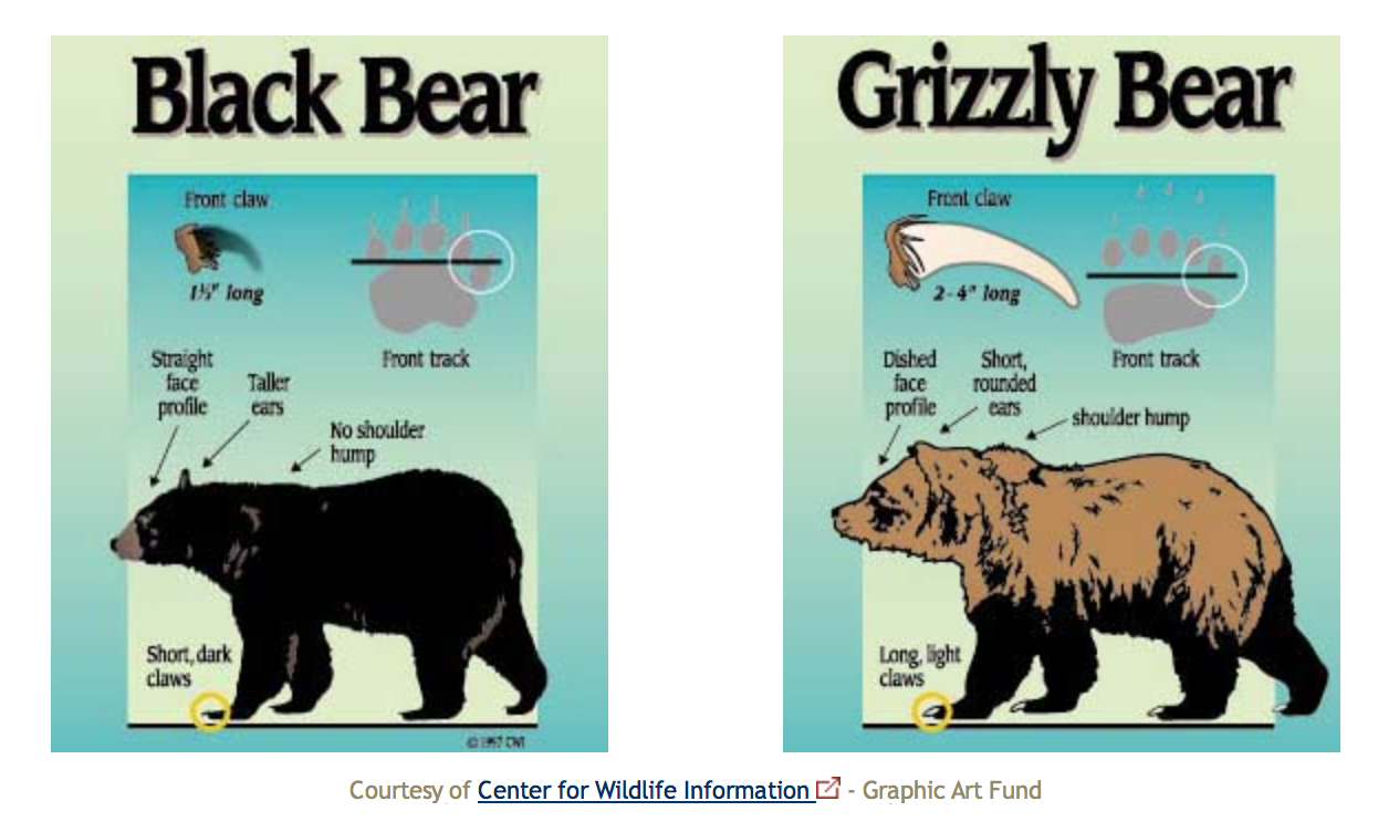 what to do when see a bear