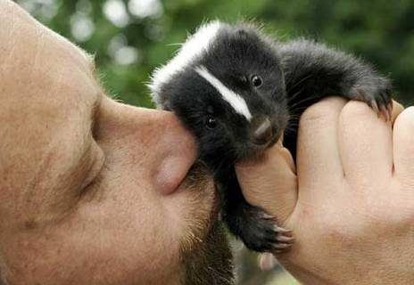 Tell me you don't identify with the look on the skunk baby's face.
