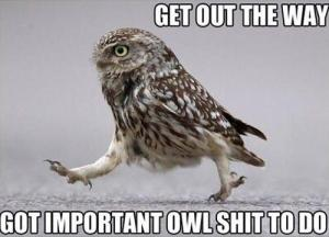 My mom sent me this on Facebook. In this analogy, I am the owl.